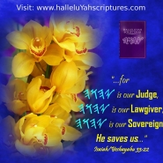 abHalleluYah Scriptures Parallel + Hebrew Bible + Sacared Bible + Restored Name Bible + The Best Bible & Devine Name Bible + The Scriptures & Cepher Yahweh + Yahwah 0002ad8